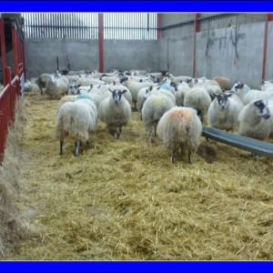 Animal Bedding Treatment