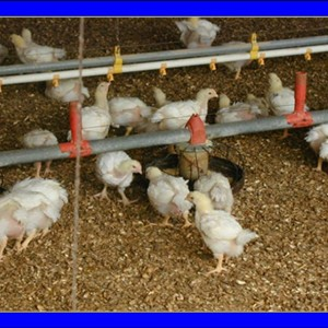 Poultry Care Products