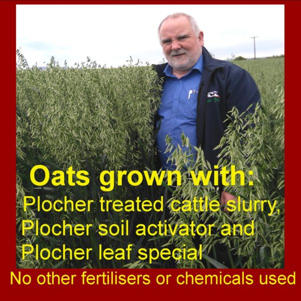 Oats grown with